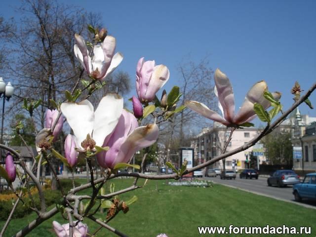 Краснодар весной, Весенний Краснодар, Весна в Краснодаре