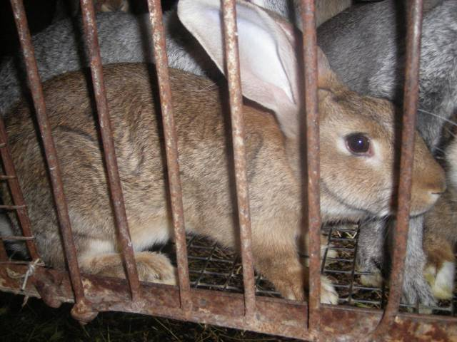 кролики, кролик, фото кролика, фото кроликов, кролик в картинках