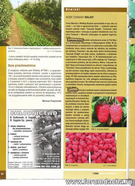 опыт выращивания малины на ягоды в теплицах, Выращивание малины в теплице, Малина в теплице