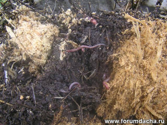 Черви в компосте