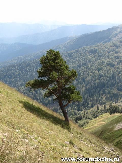 Главный Кавказский хребет, Кавказский биосферный заповедник, Лаго-наки