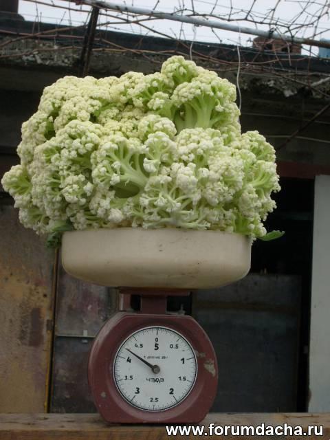 Овощи по ЭМ-технологии, Выращивание по ЭМ-технологии