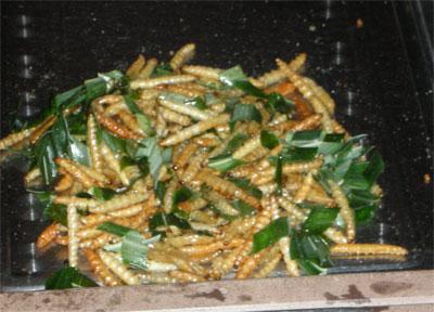 жаренные гусеницы