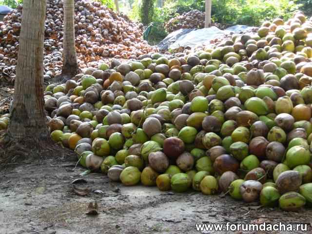 переработка кокосов