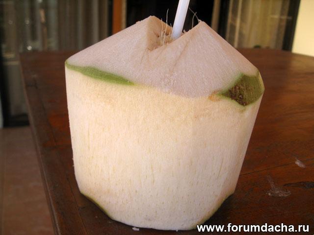 кокос фото, кокос в картинках