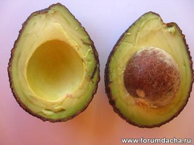 Persea americana, авокадо вырастить