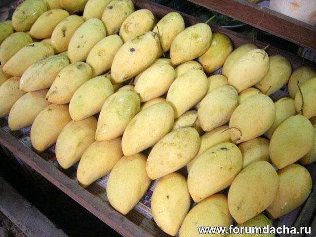 желтое манго