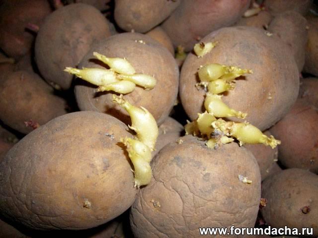 Прорастить картошку, Подготовить картофель, Посадка картошки, Посадка картофеля