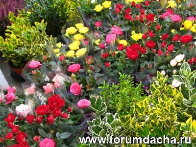 цветы юга краснодар фото: