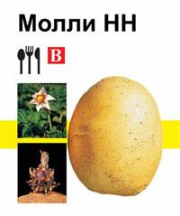 Картофель Молли, Семенной картофель Молли