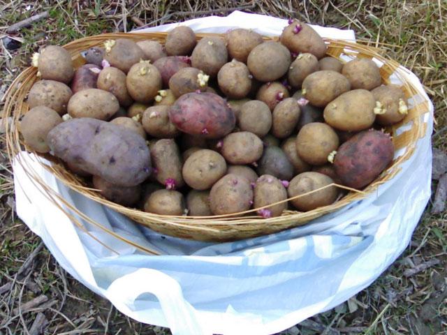 Картошка и ЭМ-Технологии