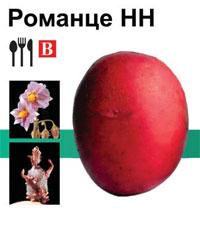 Картофель Романце, Семенной картофель Романце