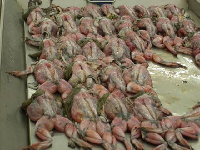 лягушки Тайланд, лягушки потрошенные, лягушек едят