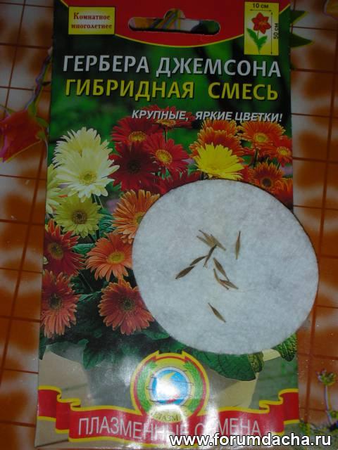 Когда сажать герберу семенами 14