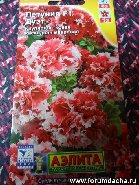 Семена фиалки  купить семена фиалок комнатных в интернет