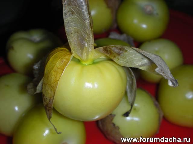 Физалис выращивание