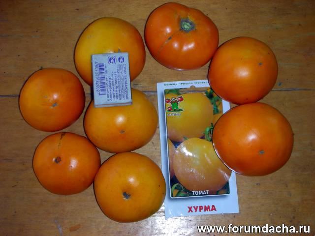 Сорт помидор «ХУРМА», Сорт томатов Хурма, Томаты Хурма, Помидор Хурма