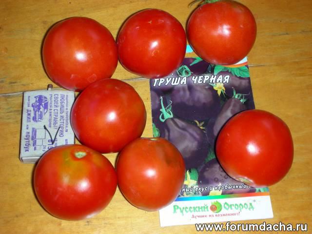 Сорт помидор «Груша черная», Груша черная, Томат Груша черная, Помидор Груша черная, Сорт томатов Груша черная