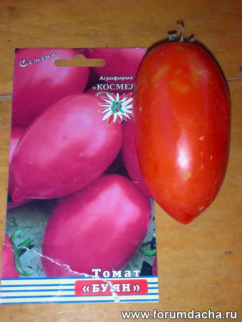 Сорт помидор «Буян», Томат Буян, Помидор Буян, Сорт томатов Буян
