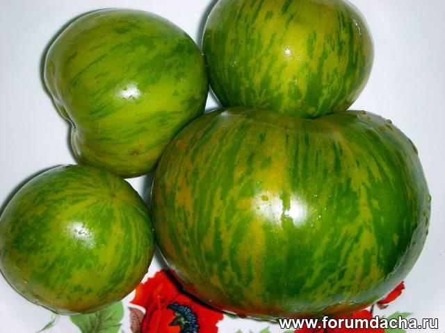 Сорт томатов «Зелёная зебра», Томат Зелёная зебра, Помидор Зелёная зебра, Зелёная зебра