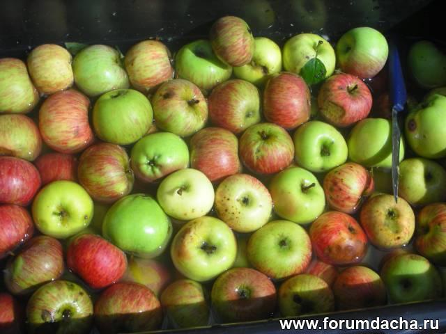 Яблочный уксус в домашних условиях. Как приготовить 80