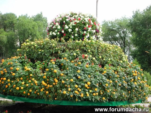 круглая клумба, цветы для круглой клумбы