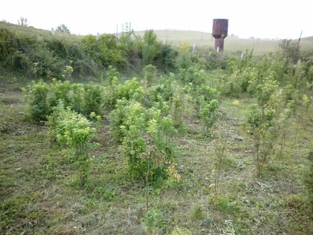 http://www.forumdacha.ru/forum/userpix/387_p1000938_2.jpg
