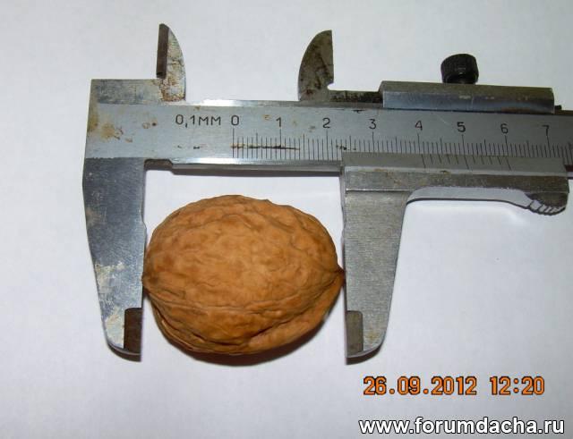 Грецкий орех в Подмосковье, Выращивание грецкого ореха в Подмосковье