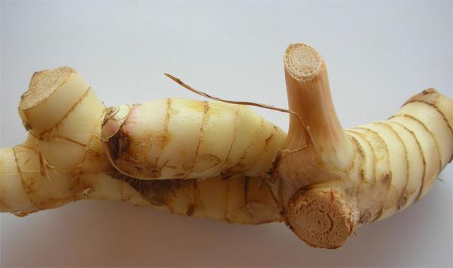 имбирь, корень имбиря, имбирный корень