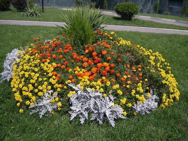 Схема посадки цветов на клумбу.