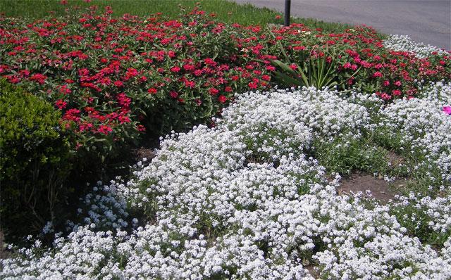 Схема городских цветочных клумб - Все.