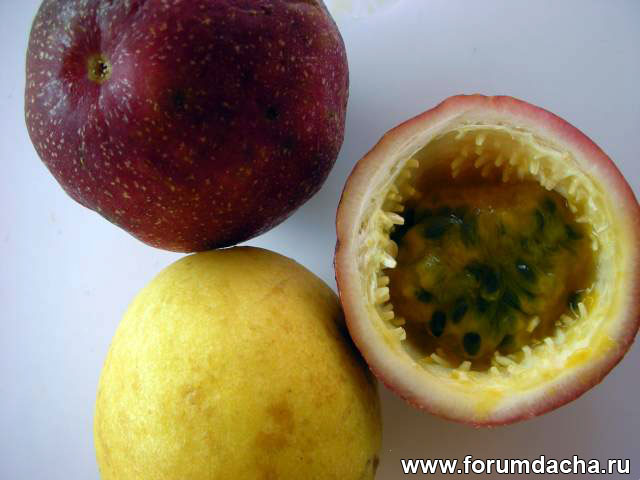 Passion fruit, Маракуйя, Пассифлора плоды, Маракуйя фото, Маракуйя в картинках
