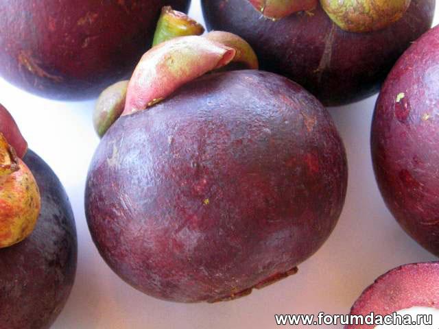 Мангостан, мангустан, мангостана, гарциния, мангкут, Mangkut, Manggis, Garcinia mangostana