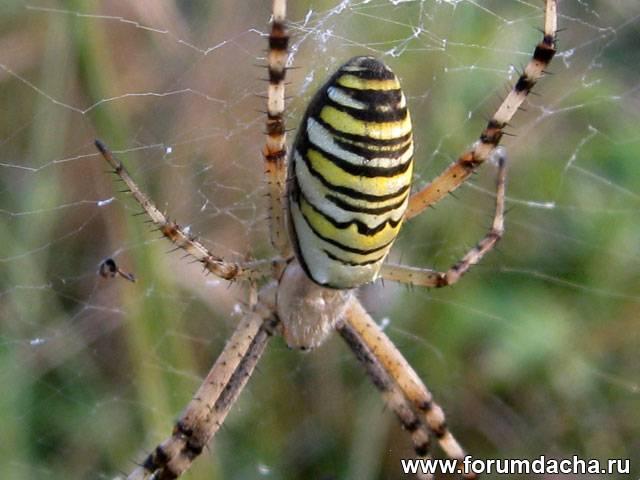 Средство от пауков