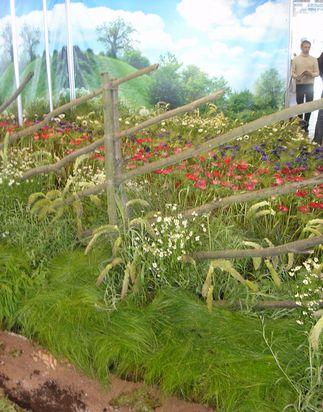 Сад в русском стиле, Компания «Архитектура живой формы»