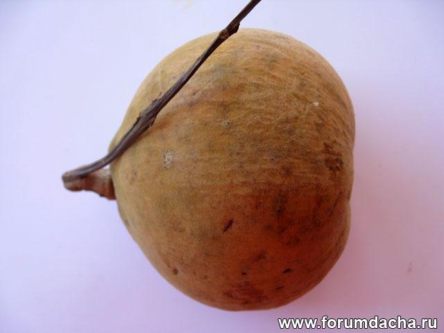 Сантол, Сантол фото, фрукт Сантол, Сантол в картинках