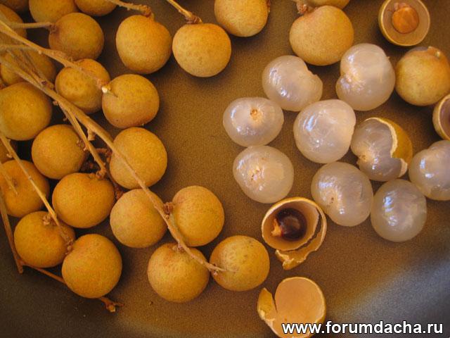 Dimocarpus longan, lam-yai, Laam-yai, Euphoria