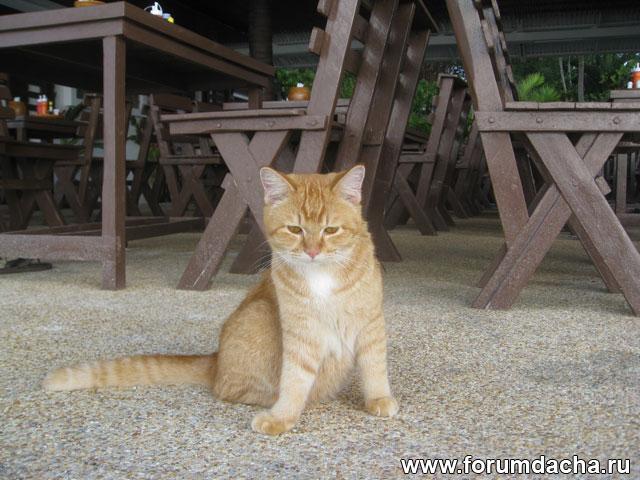 рыжий кот, фото рыжего кота, рыжий кот фото, рыжий кот в картинках